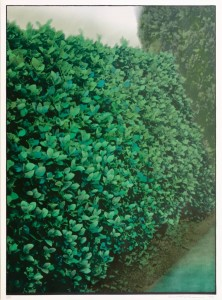 Hedges I 1977 by Ivor Abrahams born 1935